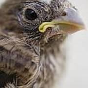 Baby Bird 3 Art Print by Jessica Velasco
