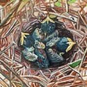 Baby Birds Art Print