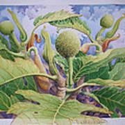 Baby Breadfruit Art Print