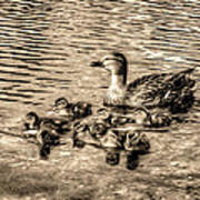 Baby Ducks - Sepia Art Print