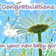 Baby Girl Congratulations Greeting Card - Oxeye Daisies Art Print