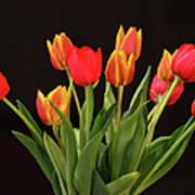 Baby Tulips Art Print