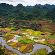 Bac Son Rice Field Art Print
