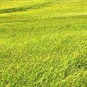 Background Of Green Summer Hay Field In Maine Art Print