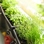 Balcony Herb Garden Art Print by Elena Elisseeva