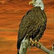 Bald Eagle At Sunrise Art Print