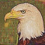Bald Eagle Embroidered Art Print