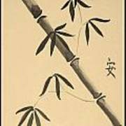 Bamboo Art In Sepia Art Print