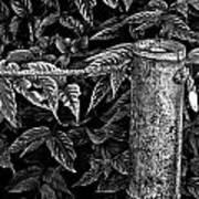 Bamboo Border Art Print