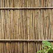 Bamboo Fence Art Print by Don Mason