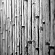 Bamboo Fence Art Print