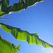 Banana Leaf In The Sky Art Print
