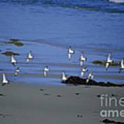 Band Of Seagulls Art Print