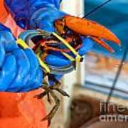 Banding An American Lobster In Chatham On Cape Cod Art Print