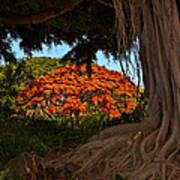 Banyan And Poinciana Trees Art Print