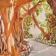 Banyan In The Afternoon Art Print
