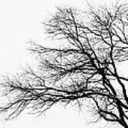 Bare Tree Silhouette Art Print