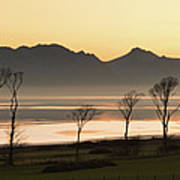 Bare Trees At Coast Art Print by Image by Peter Ribbeck