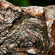 Bark Art Print by Christopher Gaston