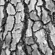 Barking Up The Wrong Tree Art Print