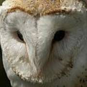 Barn Owl Portrait Art Print