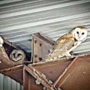 Barn Owls 1 Art Print