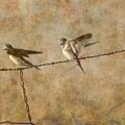 Barn Swallows On Barbed Wire Fence Art Print