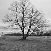 Barren Tree On A Winters Day Art Print