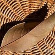 Basket Of Brown Art Print