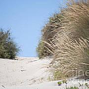 Beach Sand Dunes II Art Print