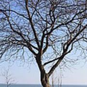 Beach Tree Art Print