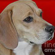 Beagle - A Hound's Hound Art Print by Christine Till