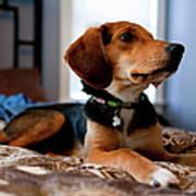 Beagle Mix Puppy Art Print