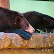 Bear Nap Art Print