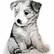 Bearded Collie Pup Art Print by Michelle Harrington