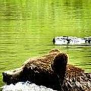 Bearly Swim Art Print