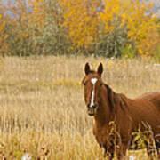 Beautiful Grazing Horse Art Print