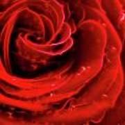 Beautiful Abstract Red Rose Art Print by Oleksiy Maksymenko