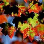 Beautiful Autumn Art Print