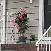 Beautiful Floral Entrance Art Print