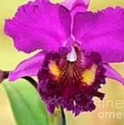 Beautiful Hot Pink Orchid Art Print