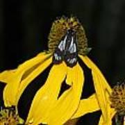 Beautiful Moth Ser2 Art Print