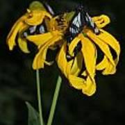 Beautiful Moths Ser1 Art Print