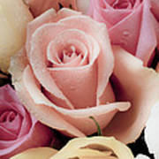 Beautiful Roses Art Print by Garry Gay