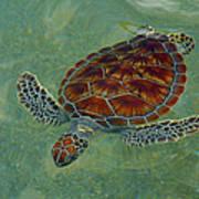 Beautiful Sea Turtle Art Print