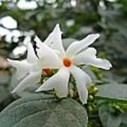 Beautiful White Flower With Orange Center Art Print