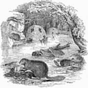 Beavers Art Print
