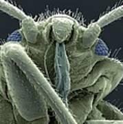 Bedbug Head, Sem Art Print