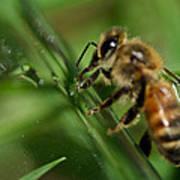 Bee In Green Art Print