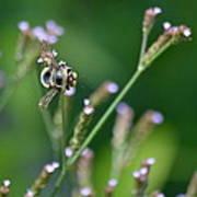 Bee On End Art Print